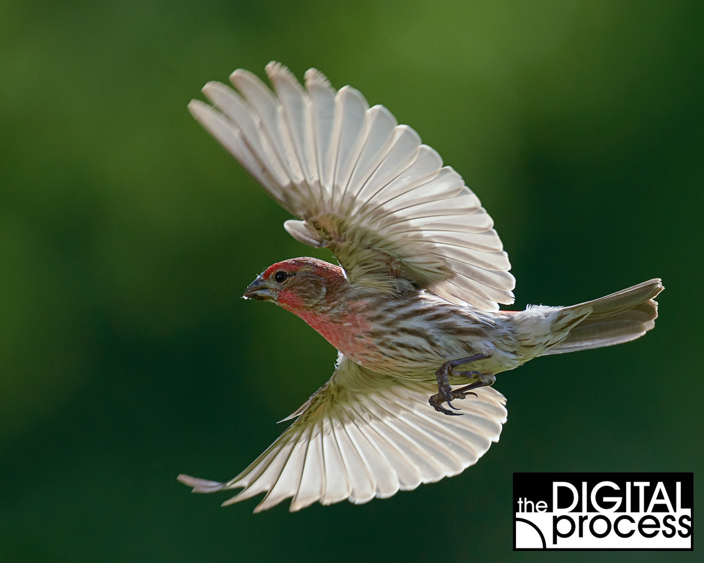 backyard bird photography a guide for beginners