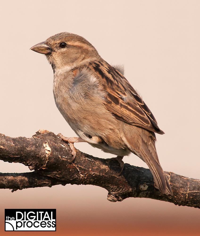 backyard bird photography tips golden hour jpg